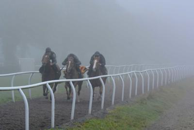 Gallops_Fog_001_0