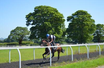 Cantering in the Sun