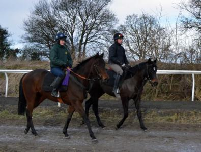 DUSKY QUEEN AND GIDDY