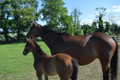 Flying Clarets and foal