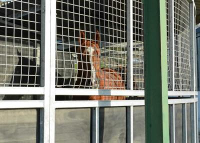 Farlow - Horsewalker (1)