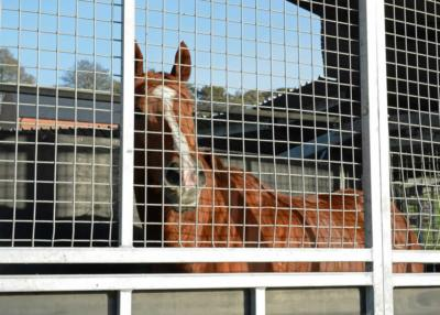 Farlow - Horsewalker (2)